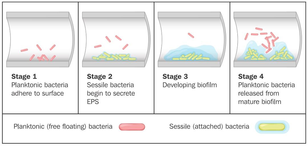 Are Legionella resistant to chlorine? – Legionella Risk
